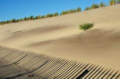 (Martin PEREZ 68) Tags: dune littoral montalivet plage playa beach ocan atlantique atlantic gironde shadow ombre sombra aquitaine
