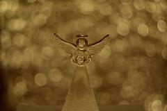 DSC_5164 (Milena Z) Tags:          442      angelo angel colore color luce giocodiluci ombra bokeh helios helios442 manuallens senzafiltri vladikavkaz