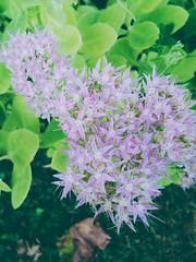 Flower (martinaderbio4) Tags: flower fleur fiore pinkandgreen flikr nature love