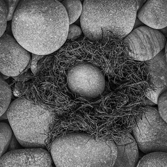 stone egg (marianna_a.) Tags: p2820031 stones round smooth egg beach fun seaweed life marine newfoundland mariannaarmata rocks blackandwhite blackwhite monochromatic