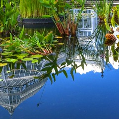 It's an Upside Down World (Cam Miller 2016) Tags: phippsconservatorypittsburgh botanicalgardens reflection pond lilypond watergarden pittsburgh