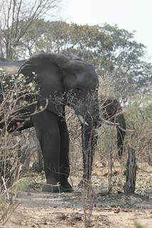Namibia Dangerous Game Safari - Caprivi Strip 74