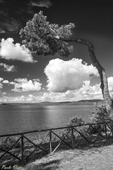 L'opera del vento - The work of wind (Pablos55) Tags: pino cielo nuvole curvo sky clouds bent pine