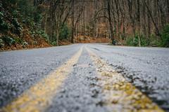 Pisgah National Forest (bradleysiefert) Tags: appalachianmountains ashevillearea northcarolina pisgahnationalforest centeroftheroad forest stateforest pisgahforest unitedstates us