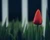 Beautiful Blur 030 (resourcehfh) Tags: aaronburden instagram mayflowers spring