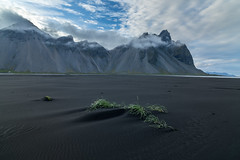 Volcanic Sand Grass (www.alexharbige.com) Tags: iceland vesturhorn sand beach ripples