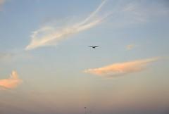 Sunrise/Carmel River Beach/lagoon (LOLO Italiana) Tags: sunrise carmelriverbeach dawn nature landscape seascape centralcoast montereycounty carmel ca sand beach clouds oneperson shadow carmelriverlagoon earlymorninglight