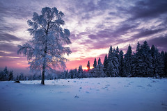 cold sunset II (Dennis_F) Tags: schnee trees winter sunset snow black cold tree ice clouds zeiss forest germany deutschland frozen woods sonnenuntergang sony wide wolken fullframe dslr kalt eis wald bume ultra schwarzwald blackforest baum ssm 1635 uwa weitwinkel gefroren ultrawideangle uww a850 163528 sonyalpha sonydslr vollformat schwarzwaldhochstrase zeiss1635 sal1635z cz1635 sony1635 dslra850 sonya850 sonyalpha850 alpha850 sonycz1635