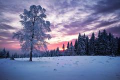 cold sunset II (Dennis_F) Tags: schnee trees winter sunset snow black cold tree ice clouds zeiss forest germany deutschland frozen woods sonnenuntergang sony wide wolken fullframe dslr kalt eis wald bume ultra schwarzwald blackforest baum ssm 1635 uwa weitwinkel gefroren ultrawideangle uww a850 163528 sonyalpha sonydslr vollformat schwarzwaldhochstrase zeiss1635 sal1635z cz1635 sony1635 dslra850 sonya850 sonyalpha850 alpha850 sonycz1635