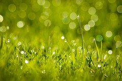 Lawn Twinklers