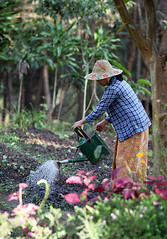 Starting A New Season ... (AnyMotion) Tags: travel woman plants work garden reisen southeastasia gardening burma myanmar frau garten birma watering birmanie kalaw gartenarbeit anymotion 2013 giesen amararesort