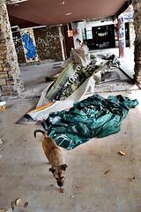 """Καμμένη """"Αλάσκα"""" (Eleanna Kounoupa) Tags: street dog alaska ruins greece ελλάδα kifissia δρόμου κηφισιά ερείπια σκύλοσ αλάσκα"""