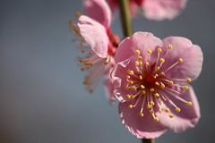 早春の香り
