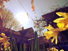 Good morning, sunshine! (Ben McLeod) Tags: sun lens lensflare flare sellwood sunflare uploaded:by=flickrmobile flickriosapp:filter=iguana iguanafilter