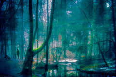 Walking in the cold and dark forest! (radonracer) Tags: schnee winter forest colorful digiart wald paintit farbenfroh radonart