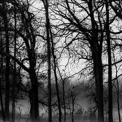 Winter Forest In Fog 002 (noahbw) Tags: trees winter bw mist snow monochrome misty fog forest square landscape blackwhite woods nikon branches foggy explored hellernaturecenter d5000 noahbw