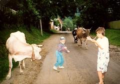 041_Tiszaborkt_1992 (emzepe) Tags: boy cow village cattle little away run ukraine 1992 scarred kirnduls ukraina fl haza  nyr falu oblast hazafel  ukrayina jlius ukrajna tehn mennek krptalja falusi legel regiunea zakarpatska kisfi zakarpattia  szarvasmarha szalad  subcarpatia faluban  megijedt szervezett krptaljai legels tiszaborkt  kvsy legelrl vonulnak hajtjk