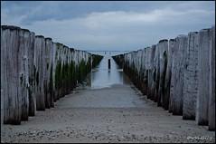 Breskens (Shelley_Van_Belleghem) Tags: beach nederland zeeland breskens