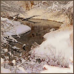 Winter Ducks in the Stream (Tim Noonan) Tags: trees winter light shadow snow canada reflection texture ice water sepia digital photoshop stream branches ducks tint exhibition legacy mosca hypothetical crmedelacrme tistheseason masterclass lavieenrose thegoldengallery vividimagination justimagine artdigital greenscene shockofthenew stickybeak sharingart awardtree thecubeexcellencygallery davincimemories exoticimage alestdeden admintalkinternational netartii maxfudgeawardexcellencegroup kreativepeople digitalartscenepro thenewmasterclass crmedelacrmelev2