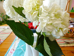 white hydrangea (On Bradstreet) Tags: pink flowers easter spring flora maine traditions ranunculus rituals vernalequinox homeandgarden easterflowers ostara march21 unschooling onbradstreet secularpagan