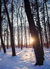 Was vom Tage übrig blieb (thomasstache) Tags: winter sunset germany deutschland sonnenuntergang sachsen lensflare wald sonnenschein lilienstein sächsischeschweiz
