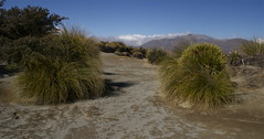 alpine dry waterway (Steve Attwood) Tags: mountain landscape conservation erosion doc tussock highcountry conservationarea kettlehole docland lakeclearwater matagouri hakatereconservationpark snowtussock southislandhighcountry
