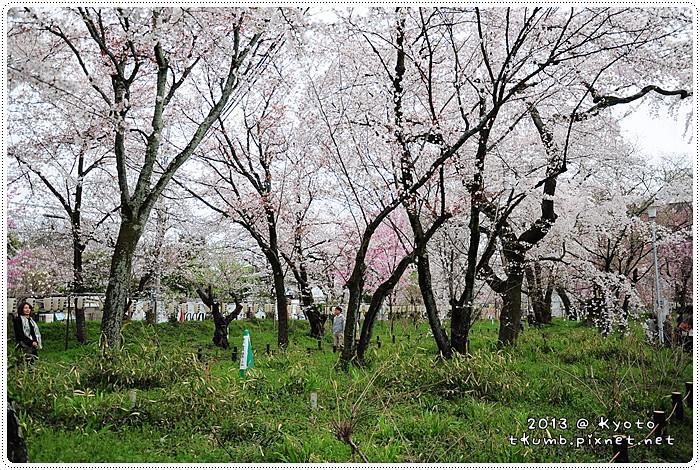 平野神社 (3).jpg
