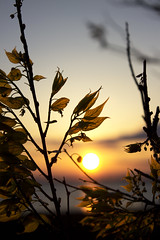 (DFChurch) Tags: sunset leaves leaf