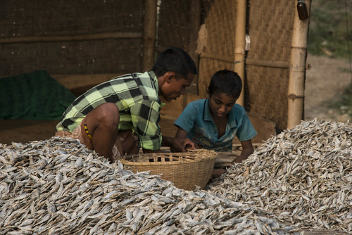 Dry fish in Sylhet, Bangladesh. Photo by Finn Thilsted, 2013.