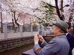 A Joyous Time of Year (Jake Jung) Tags: man japan river cherry japanese kyoto candid sony blossoms streetphotography elderly   getty editorial  sakura gettyimages flickrvision kiyamachi    apsc nex7 japanoramamagazine sel20f28 e20mmf28 jakejung