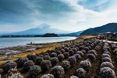Last Stop at Kawaguchiko (notjustnut) Tags: travel mountain lake japan landscape fuji traveller fujisan ropeway mtfuji kawaguchilake