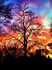(Tessa Beligue) Tags: park nyc newyorkcity trees sunset urban colorful centralpark vibrant horizon colorphotography dramatic beautifullight urbannature beautifulcolors cinematic magichour goldenhour iphone captivating urbanbeauty vibrantcolors
