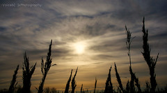 In The Wind (  Voiceb[ ]x Photography  ) Tags: uk blue winter sunset orange cloud sun black silhouette skyline clouds reeds skyscape landscape google weeds colours norfolk front riverbank sunsetting foreground vbp 2013