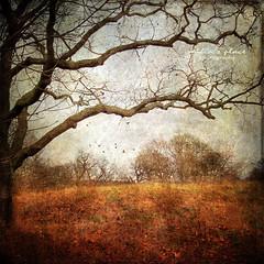 Djurgrden (Milla's Place) Tags: trees nature landscape sweden stockholm textures textured djurgrden
