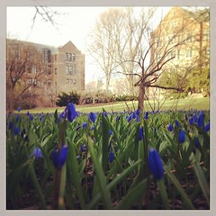 Spring is finally coming #annarbor #michigan #umich #campus #spring (bryan elkus) Tags: square squareformat rise iphoneography instagramapp uploaded:by=instagram
