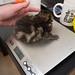 Mia's Kittens 8