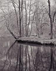 Derbyshire Wye - Duck Holds Wood - The Song Room (Regular Rod) Tags: blackandwhite film water monochrome reflections river fishing derbyshire peakdistrict 8x10 ash flyfishing array fomapan shenhao semistand ysplix rnbderbyshirewye pyrocatechol derbyshirewye catechol obsidianaqua fujinonc300mm filmdev:recipe=8946