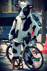 Cow on a Bike (Atwater Village Newbie) Tags: california ca city orange bike cali la cow losangeles los spring angeles sunday sneakers southern socal cal april sneaker bovine 2013 dsc0126 ciclavia