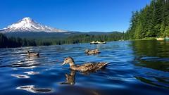 trillium lake (sa5641.rit) Tags: mthood trilliumlake
