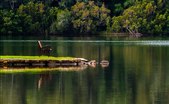 Alter-ego_DSC5847 (Mel Gray) Tags: chair water lake lakemacquarie green reflections