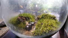 20160727_175127 (mobile_gnome) Tags: moss terrarium