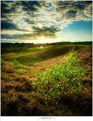 De paarse heuvels van de Posbank (nandOOnline) Tags: desteeg posbank paars natuur heide struikheide landschap veluwezoom heuvels veluwe gelderland nederland