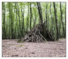 Rennes Forest #1 (Oeil de chat) Tags: fujifilm x20 couleur foret vert nature serie promenade