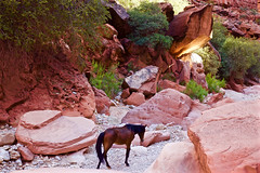 I have loved deeply (OneLifeOnEarth) Tags: onelifeonearth havasu arizona