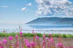 L'adieu/Farewell/Farväl [Explore] (Elf-8) Tags: charlevoix sea tide mountain river saintlawrence flower field fog