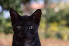 Bello (39Leon) Tags: cat gatto gattini gattino 50mm