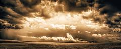 Storm Over Lone Tree (David Dahlenburg) Tags: southaustralia sa australia rural farm clouds mono pano dahlenburg landscape saddleworth gumtree field