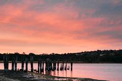 Dee Why Lagoon (haoguoju) Tags: australia nsw newsouthwales sydney winter spring landscape outdoor a7m2 a7 sony sonya7markii sonyilce7m2 fe f14 sunset longexposure deewhy dy lagoon deewhylagoon deewhybeach beach dock jetty pink cloud samyang samyang85mmf14asifumc 85mm manualfocus lake