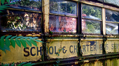 Out of Service 2 (Greg Adams Photography) Tags: windows summer bus abandoned yellow rust pennsylvania decay rusty pa growth crop transportation transit vehicle schoolbus desolate decaying charter returningtonature hhsc2000