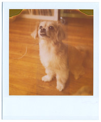 willy (jeremy pettis) Tags: polaroid slr680 773
